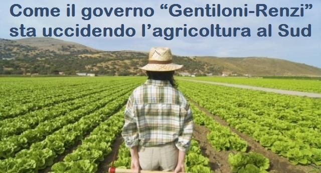 """Come il governo """"Gentiloni-Renzi"""" sta uccidendo l'agricoltura al Sud"""