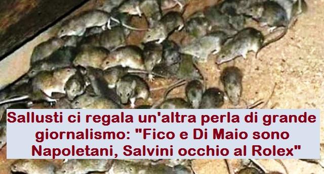 """Sallusti ci regala un'altra perla di grande giornalismo: """"Fico e Di Maio sono Napoletani, Salvini occhio al Rolex"""" …(Per non urtare la vostra suscettibilità, invece di quella di Sallusti abbiamo optato per una foto di ben più simpatici topini di fogna)"""